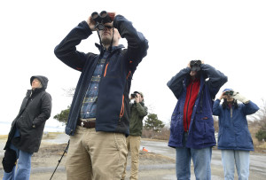 Maine Audubon naturalist Doug Hitchcox (background in green jacket) leads a group of birdwatchers along the Eastern Prom in Portland. From l to r is Kathy Stewart of South Portland, Ned Kane from Portland, Hitchcox, Joe Bates from Portland and Kristina MacCormick from Portland. John Patriquin/Staff Photographer