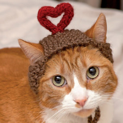 "A cat models ""I Heart You,"" one of Sara Thomas's creations from the book, ""Cats in Hats,"" published by Running Press."