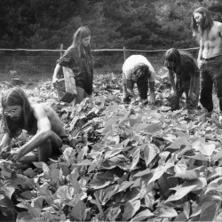 Young people work in a garden at the Pikes Falls community in Jamaica, Vt., in the 1970s. Vermont's population jumped 15 percent in the 1970s, with more than half of the increase coming from people moving from out of state, and some moving to experimental communes. The state historical society is collecting stories and artifacts in a two-year study to document the lasting influence the 1970s had on the state.