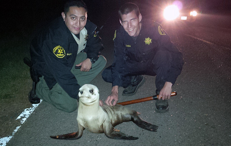 Mendocino County Deputy Sergio Chora-Alvarado, left and Deputy Ze Manuel Limaa, pose for a photo with a stranded Sea Lion pup.