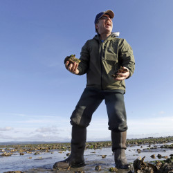Taylor Shellfish manager Eric Hall smiles as he picks up a handful of oysters he planned to snack on Friday, at low tide in Willapa Bay near Tokeland, Wash.
