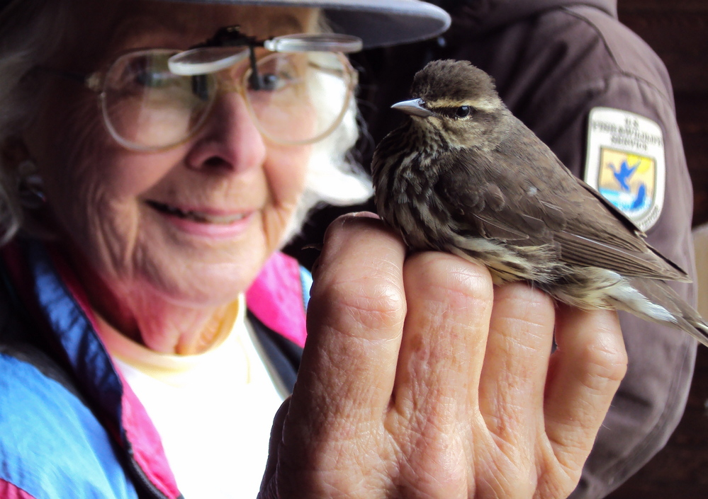 Birding enthusiast June Ficker demonstrates bird banding. She will head a talk and bird walk Saturday as part of International Migratory Bird Day activities being offered at the Wells Reserve. Photo by Scott Richardson