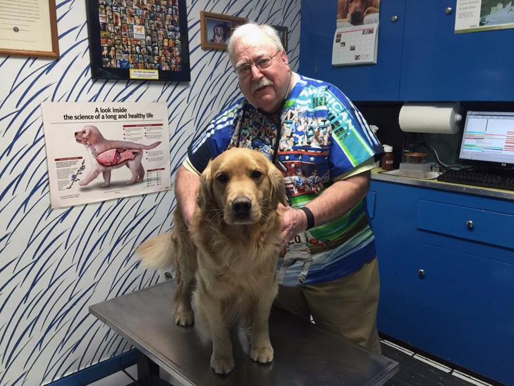 Dr. Michael Lappin examines his golden retriever, Isaac, at The Animal House, Lappin's office in Buzzards Bay, Mass. Isaac is No. 64 in the cancer study.
