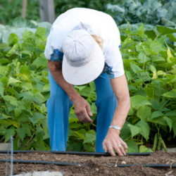 Gardeners may take part in the University of Maine Cooperative Extension's Harvest for Hunger program by planting extra vegetables and fruit to give to food pantries.