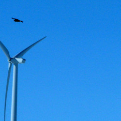 A golden eagle flies over a wind turbine in Converse County, Wyo. An advocacy group says weak federal policies are allowing wind energy companies to place thousands of turbines in locations that are dangerous to birds.