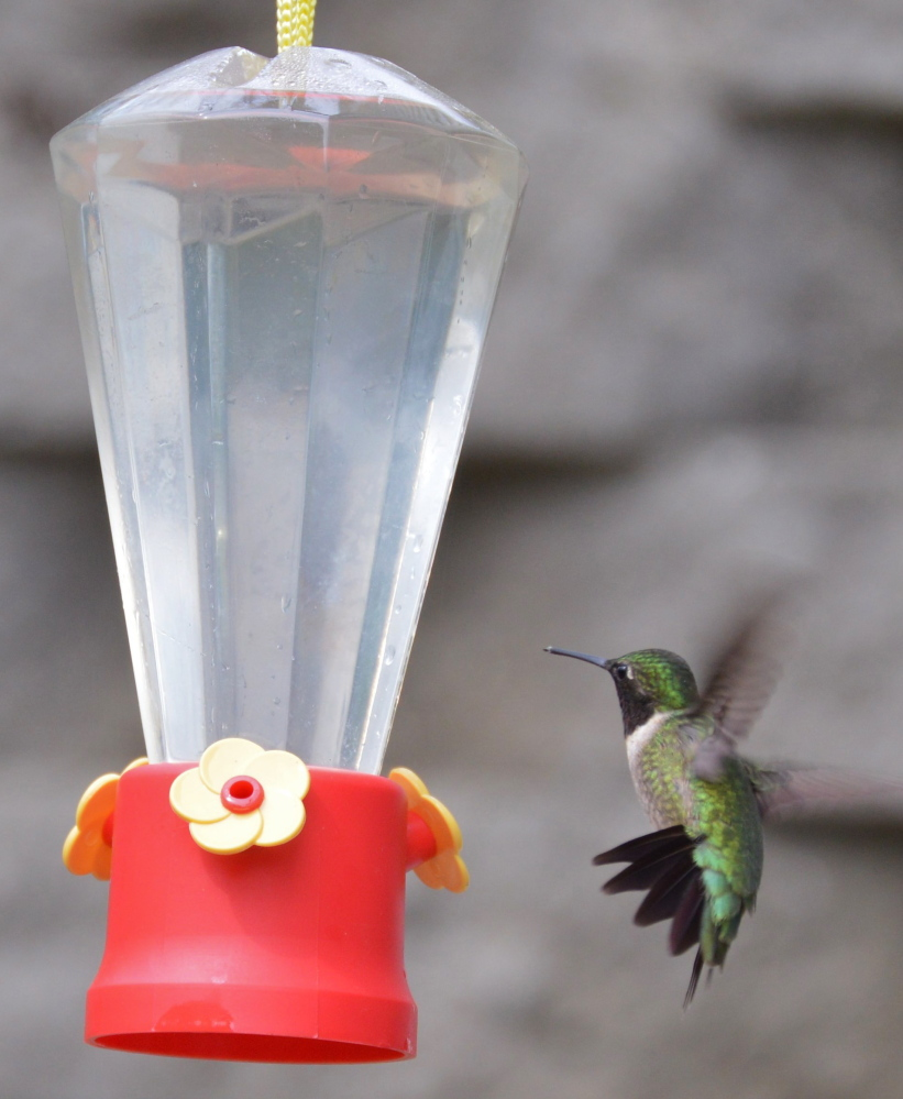 Why seek nectar from flowers when Brian Lovering makes it available in a feeder at his New Gloucester garden? The hummingbirds just might be content to while away the summer there, and that's fine with Lovering.