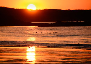 Another golden day dawns at Scarborough Beach, where Ann Blanchard and the seabirds are there to witness a dramatic sunrise that's occurring earlier each morning.