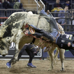 Chase Outlaw of Hamburg, Ariz., drops from his bull. Concussions are the most pervasive of the serious injuries that are occupational hazards for bull riders.