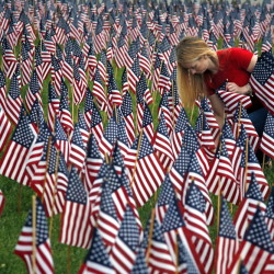 644675_memorial_day_flags_acco