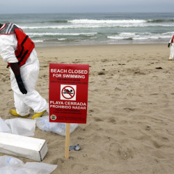 A cleanup crew collects small patches of tar that were washed ashore at Manhattan Beach, Calif., on Thursday. A seven-mile stretch has been closed as a health precaution.