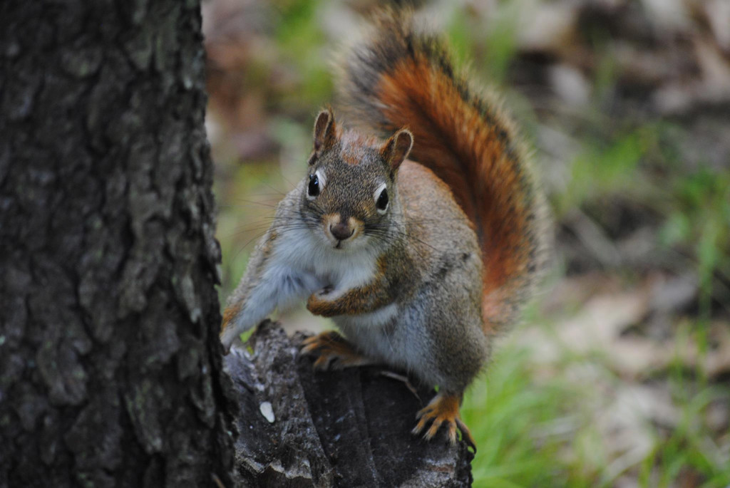 This squirrel enjoyed the spring weather in Waldoboro, where Heidi Reed got this photo.