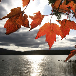 Sunlight shines through maple leaves on the edge of Echo Lake in Acadia National Park, photographed on October 2, 2009. Gregory Rec/Staff Photographer