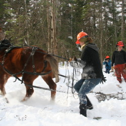 Farm manager Megan Phillips works with Sal the horse on a chilly February day dragging felled logs destined to feed a wood-burning furnace.