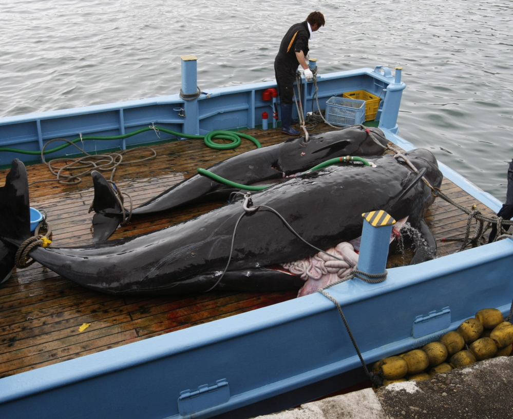 The International Whaling Commission has said that Japan has not demonstrated the need for lethal hunts in order to conduct whale stock management and research.