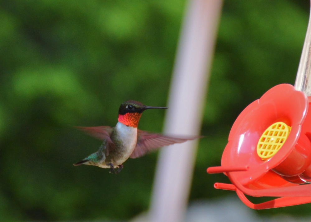 Here's another shot from Brian Lovering, who found this hummingbird visiting his New Gloucester home on a Saturday evening.