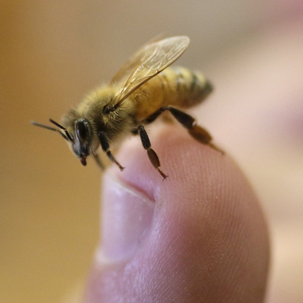 With one-third of Norway's native bee species endangered, Oslo steps in to help.