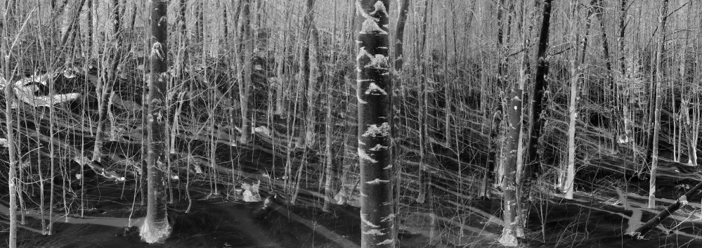 """Panorama of Winter Woods,"" black and white negatives, 2015"