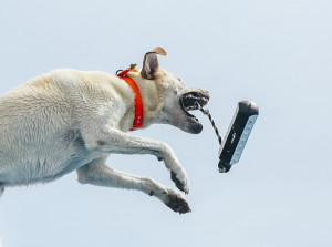 Jon Mayhew's dog, Bruin, opens his jowls to catch his toy mid-flight as he launches from the dock to the water during the Dock Dogs competition in Scarborough on Saturday.