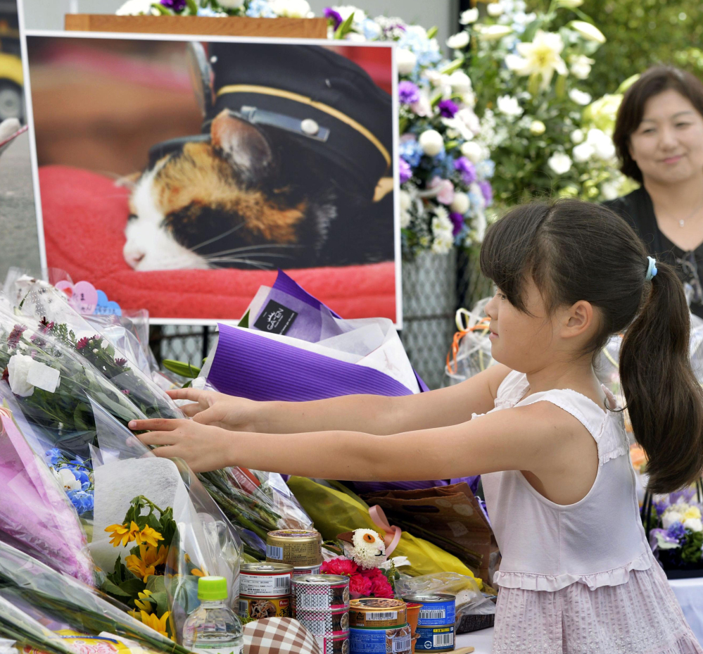 A girl lays bouquets of flowers at an altar especially set up for a funeral of Tama, a cat stationmaster, in Kinokawa City, Wakayama Prefecture, Japan, on Sunday.