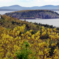 Private homes are seen from the Park Loop Road overlooking Frenchman's Bay at Acadia National Park, Friday, May 26, 2006. The Associated Press
