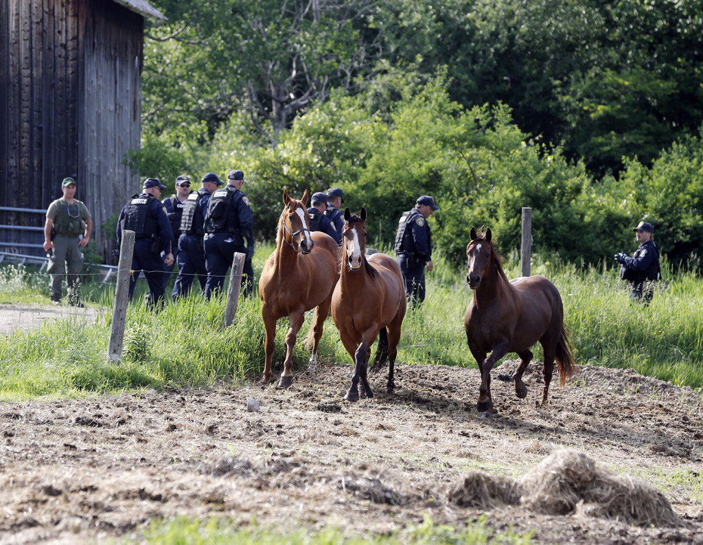 Law enforcement officers walk past horses while searching two prisoners who escaped from the Clinton Correctional Facility on Saturday. The Associated Press