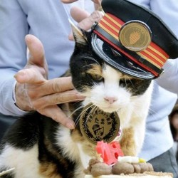 Tama, Japan's feline star of a struggling local railway, receives a birthday cake on her 16th birthday in this In this April 29, 2015, photo. Tama died of a heart failure on June 22. Kyodo News via AP