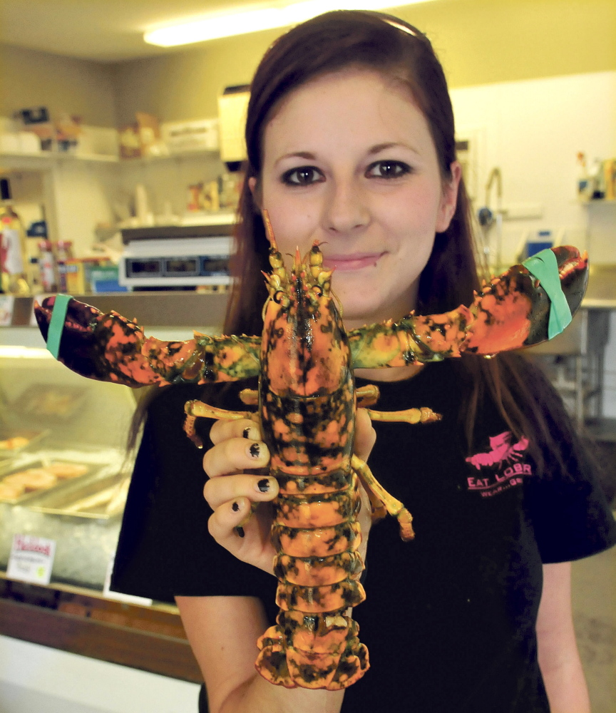 Jenny Peterson, a 201 Market employee, holds a rare calico lobster at the Skowhegan business on Thursday. Owner Chris Foster said the lobster is not for sale and he'll probably donate it to an aquarium.
