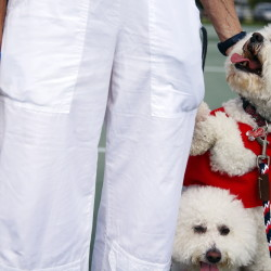 Though these dogs at a Stars & Stripes-themed patriotic parade in Florida are calm, many dogs hurt themselves by leaping over or digging under fences to flee pops and explosions. Now social media is often used to unite missing pets and their owners.