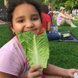 Romaine lettuce from Topsham's Whatley Farm was one of the local foods 7-year-old Gabby loved during her week in Maine.
