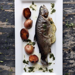 Trout roasted with lime and dill