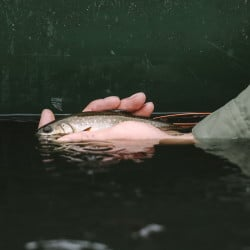 Cooler temperatures may draw brook trout as well as other species from ponds and lakes, and into flowing waters, providing the savvy angler with opportunities for productive fishing in solitude.