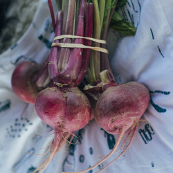 Beets on display for a Maine Sail Freight event at Thompson's Point.