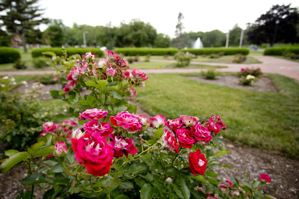 The Rose Circle in Portland's Deering Oaks. Gabe Souza/Staff Photographer