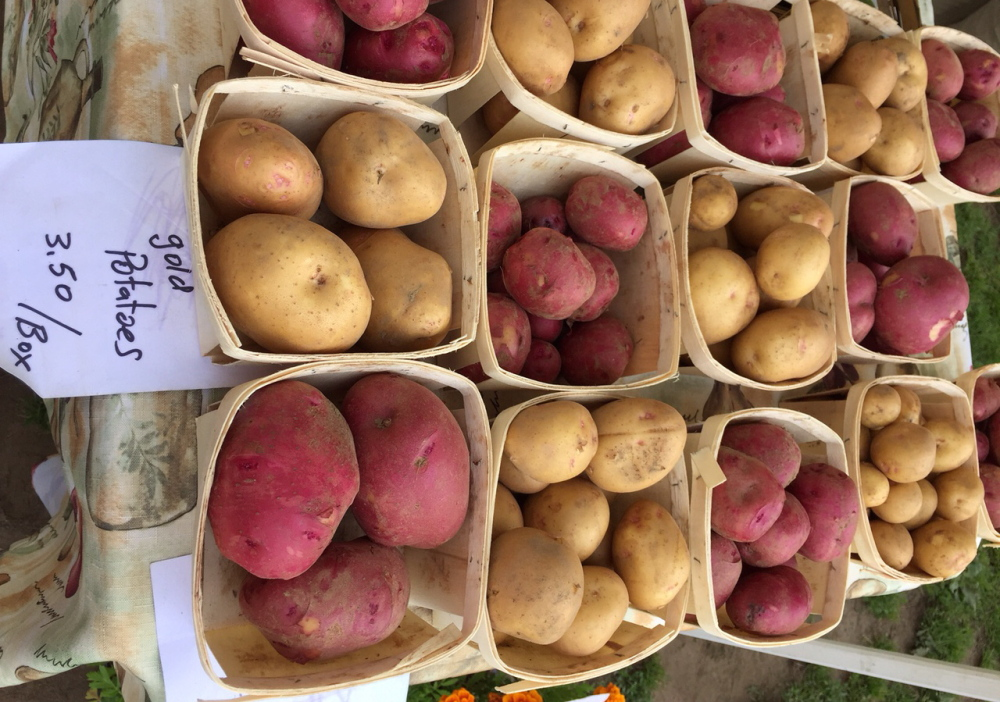 Potatoes fill that human need for comfort food. These are new potatoes from Litchfield's Applewald Farm at the Brunswick Farmers Market. Laura McClandish photo