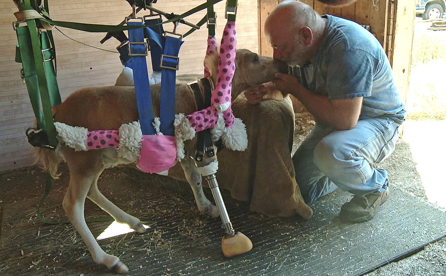 Love Prosthesis Bring A Little Horsepower To An Injured