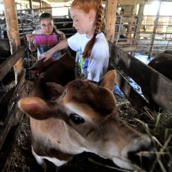 Like the late Cassidy Charette, 10-year-old Lauren Tyler likes tending to the animals, in this case Pansie the cow, at Albion's Hart-to-Hart Farm, which is raising money to build a kitchen and meeting building in honor of Charette.