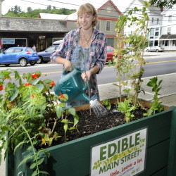 Carly Sauro, 19, an intern with the Center for Ecology-Based Economy in Norway, waters the edible plants in containers on Main Street.