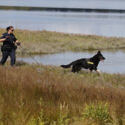 Officer Michelle Cole and police dog Kaine search along Back Cove in Portland last Thursday after an alleged sexual assault along the trail Wednesday afternoon.
