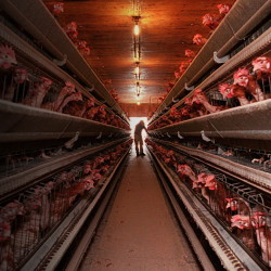 """Mainers learned this week that Austin """"Jack"""" DeCoster – who has a checkered history in Maine – hadn't sold his egg farms in Turner, above, Leeds or Winthrop. Now he's trying to lease the operations to another company."""