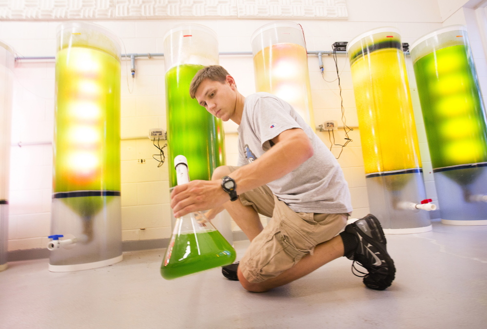 Cameron Hodgdon, a UNE marine science major, siphons liquid from culture tanks at the Biddeford campus. If its coalition is awarded bond money, UNE plans to expand its marine labs and collaborate with business partners.