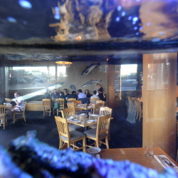 Fish are everywhere at the Old Port Sea Grill – on the walls and in a large tank.