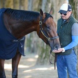 American Pharoah is preparing to run at Saratoga Race Course in Saratoga Springs, New York, which will likely be his next-to-last race.