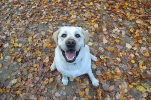 Brady-and-Fall-leaves