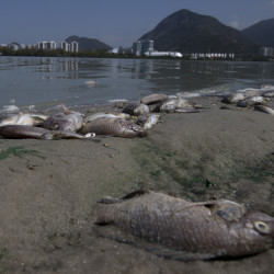 Dead fish litter the shore in front of Rio de Janeiro's Olympic Park, where 1,400 athletes are expected to compete next year.