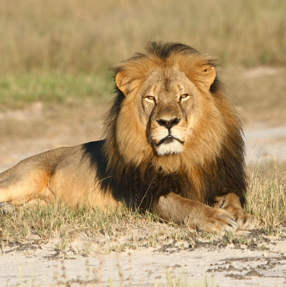 "A professional hunter in Zimbabwe who helped Walter Palmer track and kill Cecil the lion has been charged with ""failure to prevent an illegal hunt."""