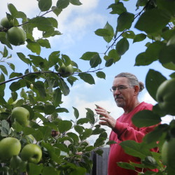 Derek Davis/Staff Photographer At Dow Farm in Standish Mike Bendzela, who helps manages the orchard, is particularly fond of the Newtown Pippin.