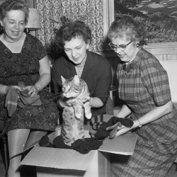 A group of women with a cat in a box of mittens, 1961. From the Portland Public Library archival collection of Portland Press Herald, Maine Sunday Telegram and Evening Express photos.