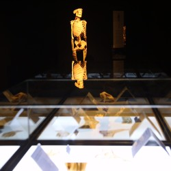 "A skeleton stands illuminated in the new ""Body Worlds"" exhibit at the Portland Science Center on Wednesday. The exhibit features tissue and organs in the context of health science, showcasing the body's response to things like excess fat storage and Alzheimer's disease. Whitney Hayward / Staff Photographer"