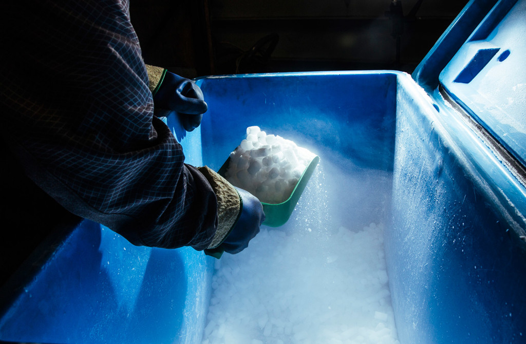 vessel services employee eli fitch scoops pellets of dry ice at the portland fish pier on