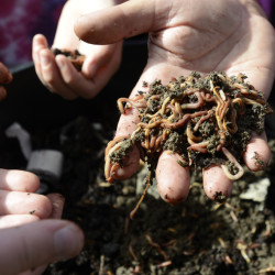 Fifth-graders at Longfellow Elementary School in Portland gather worms for their worm boxes.
